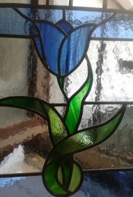 tulipano azzurro